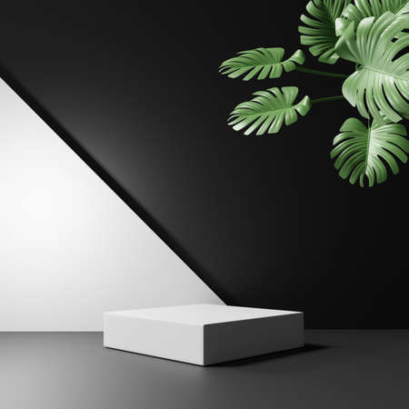 3D rendering of pedestal podium, Abstract black and white minimal display empty space with Monstera leaves. Geometry podium for beauty cosmetic products or showcase. Standard-Bild