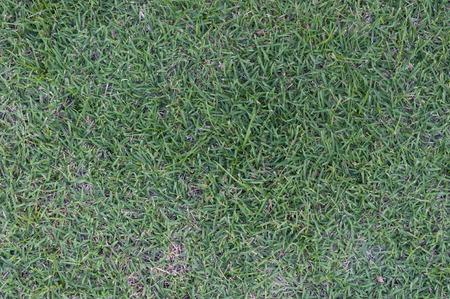 grass field: grass field