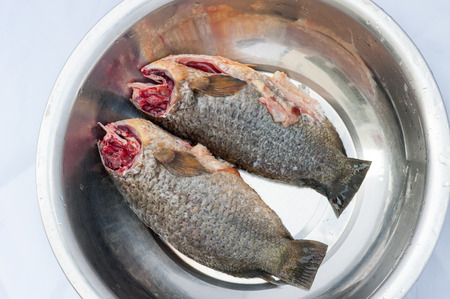 freshwater: triped snakehead fresh-water fish Stock Photo