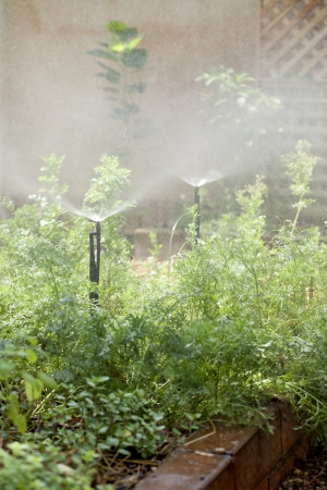 sprinkle system: Sprinkle system in the garden,Home gardening