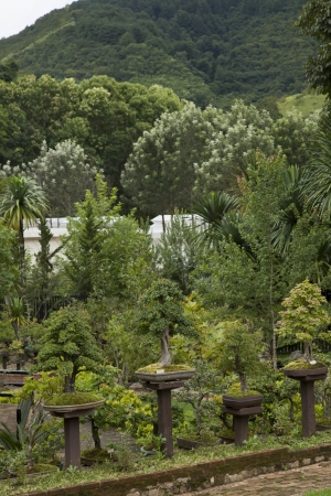 Bonsai trees in the garden,northern of Thailand photo