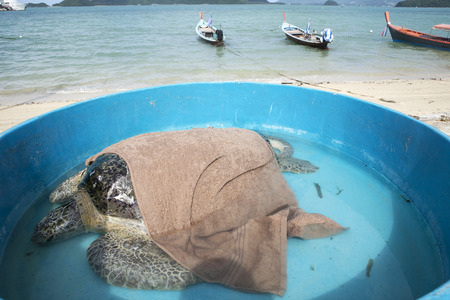 Injured turtle was healed by marine sciencetist ready to get back to the sea
