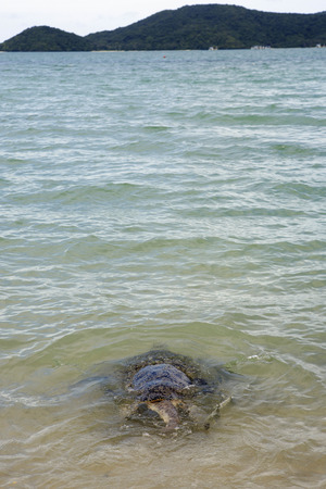Injured turtle was healed by marine scientist and release to the sea