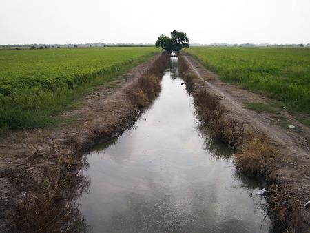 cours d eau: Cours d'eau entre les champs de riz