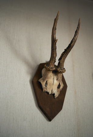 antler: antler horn decoration mounted on wall Stock Photo