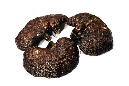 giant mushroom: Lingzhi Mushroom Ganoderma Lucidum  on background  Medicinal Mushroom in Traditional Chinese Medicine and Herb