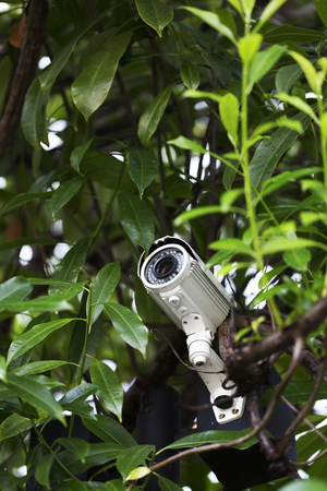 closed circuit television: Surveillance camera on pole surround by tree leaves Stock Photo