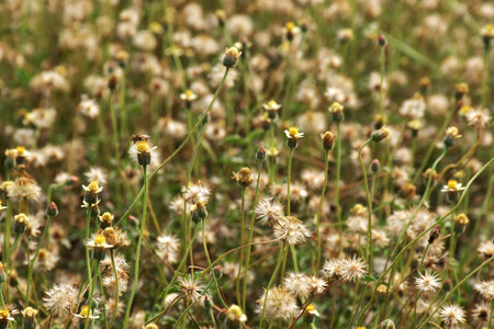 Nature background with grass flower Stock Photo