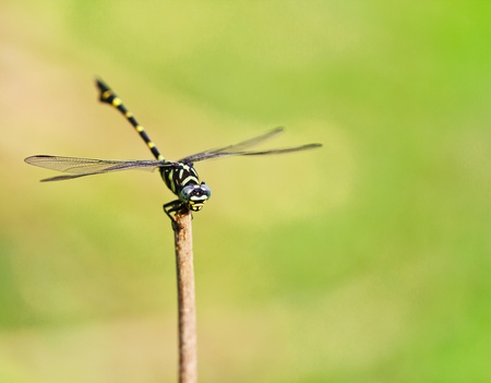 Close up dragonfly Stock Photo - 13350050