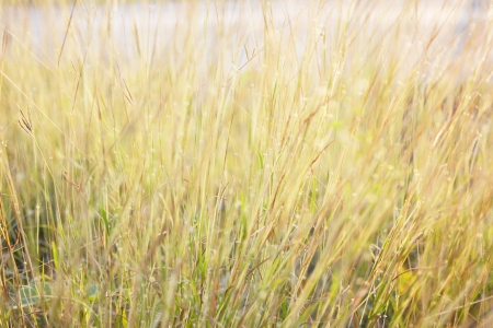 wilding: heather