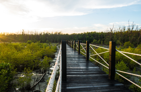 Bridge with mangrove forest in the evening