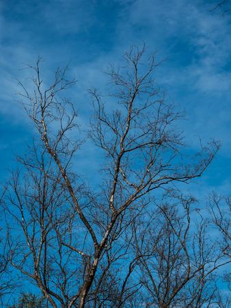 青空の木 写真素材
