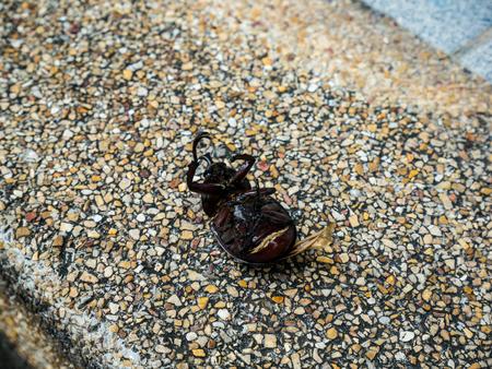 Beetle dead on the walkway. Stock Photo