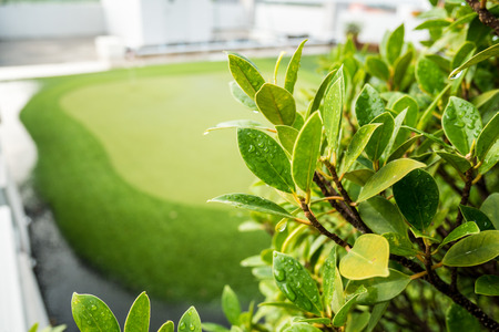 Beautiful branches with golf courses. Stock Photo