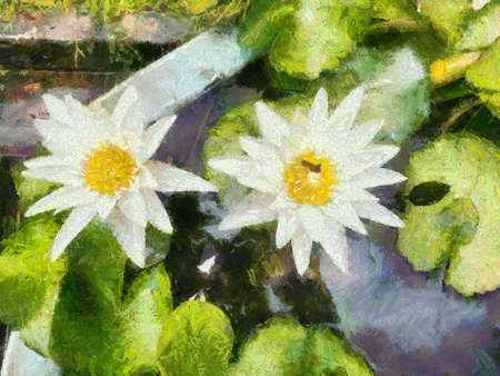 White lotus flowers in the lotus basin Illustrations creates an impressionist style of painting. Banque d'images