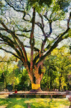 Large tree With branches spreading out wide With a beautiful branch shape Illustrations creates an impressionist style of painting.