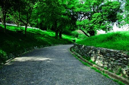 green  ornamental garden