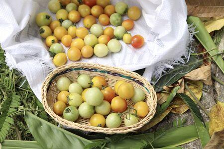 Tomato fruits on white bag