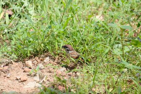 Bird, backyard  in Trang Stock Photo