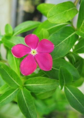 beautiful pink flower photo