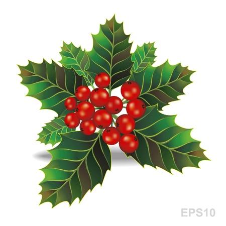 frutos rojos: Hermoso acebo rama de Navidad. Vector Vectores