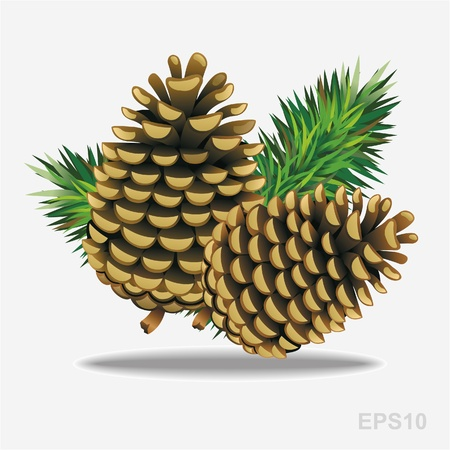 pine: Pine cones with pine needles. Vector