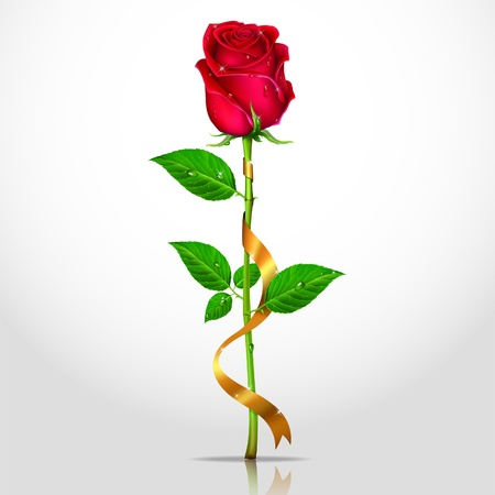 rose stem: Beauty red rose with ribbons. Vector.
