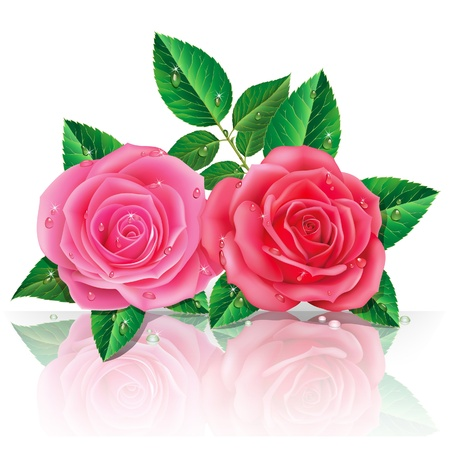 flowers close up: beautiful pink roses. Vector illustration. Illustration