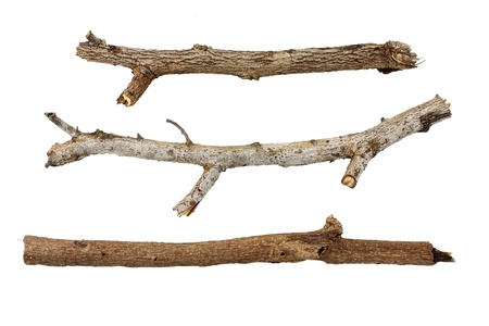 birch bark: Branches isolated on white background.