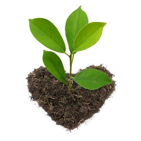 Joven planta en verde y el suelo en forma de corazón aislado sobre fondo blanco.