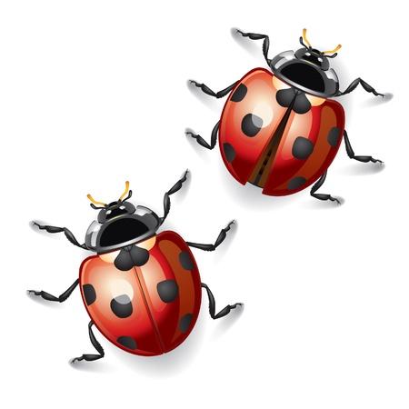 natural beauty: Ladybugs vector illustration