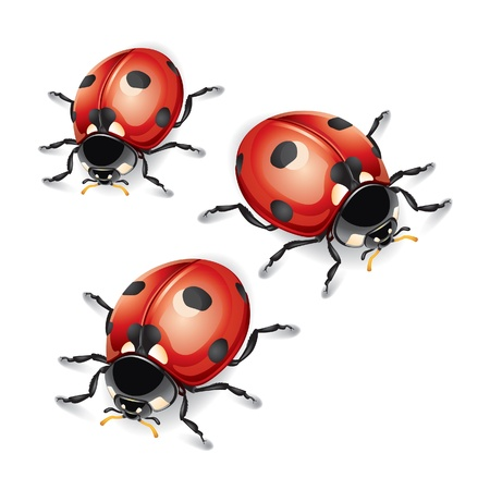 lady bird: Ladybugs vector illustration