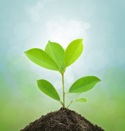 soil conservation: Young Green Plant and Soil on Green background