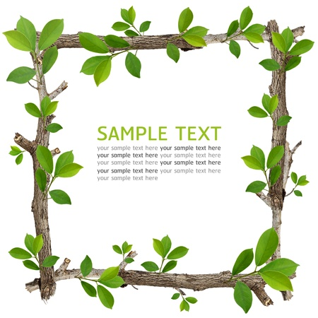 Twig and green leaf frame isolated on white background. Stock Photo - 14163147