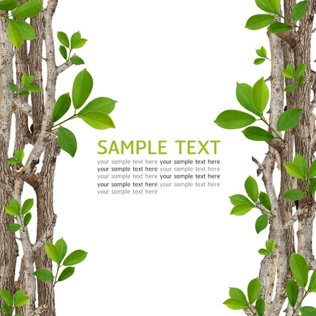Twig and green leaf frame isolated on white background. photo