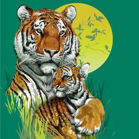 close up face: Tiger family in jungle   Illustration