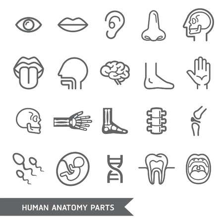 nude body: Human anatomy body parts detailed icons set. Vector illustration