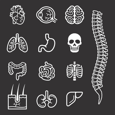 collagen: Human internal organs detailed icons set. Vector illustration