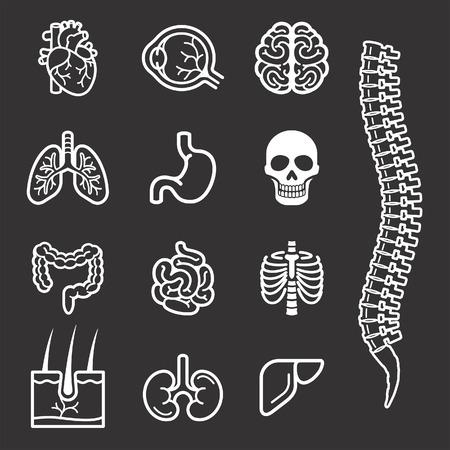 Human internal organs detailed icons set. Vector illustration