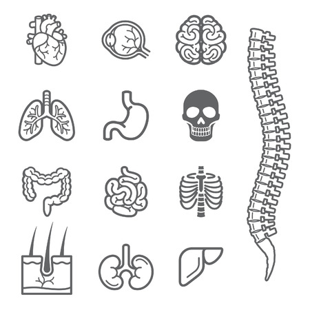 intestine: Human internal organs detailed icons set. Vector illustration