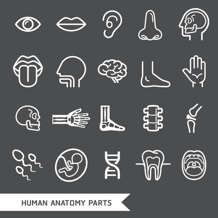 anatomy nude: Human anatomy body parts detailed icons set. Vector illustration