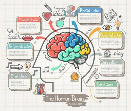 Das menschliche Gehirn Diagramm Doodles Symbole gesetzt. Illustration.