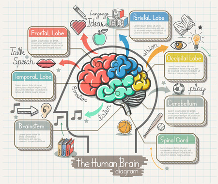 brain: The Human Brain Diagram Doodles Icons Set. Illustration.
