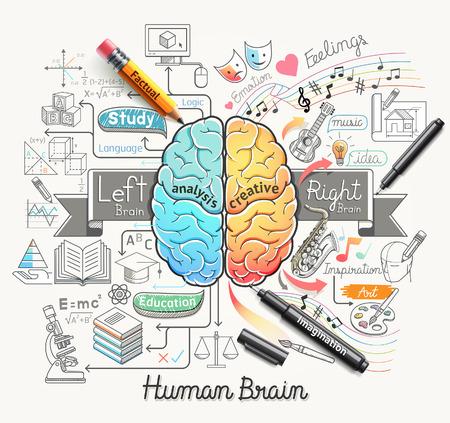 mente humana: Diagrama de cerebro humano garabatos iconos de estilo. Ilustración del vector.
