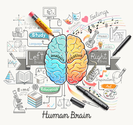 pencil and paper: Human brain diagram doodles icons style. Vector illustration.