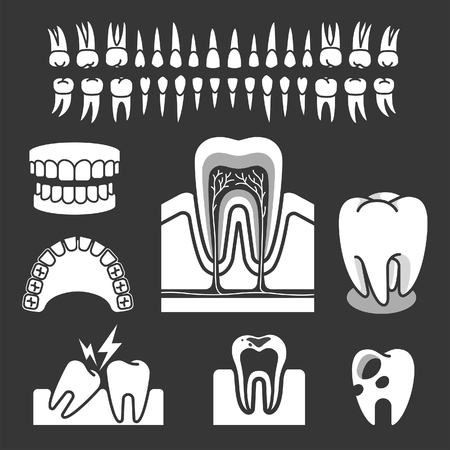 dent: Human tooth anatomy