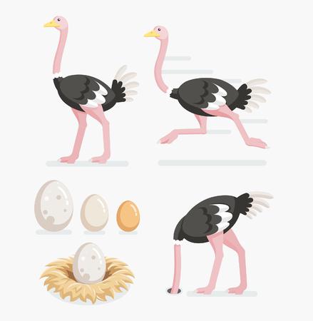 ダチョウ、ダチョウ卵が巣の上。ベクトル イラストのフラット デザイン。  イラスト・ベクター素材