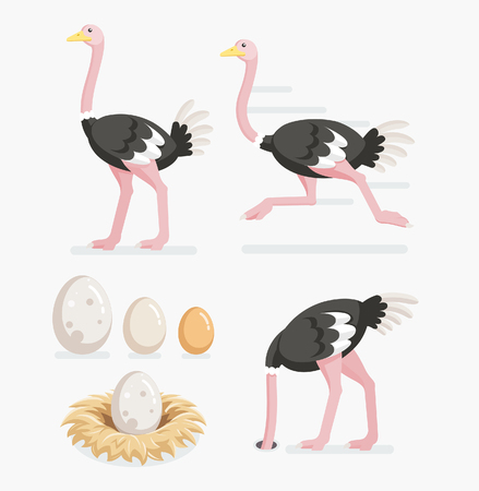 Ostrich and ostrich eggs on the nests. Vector illustration flat design.