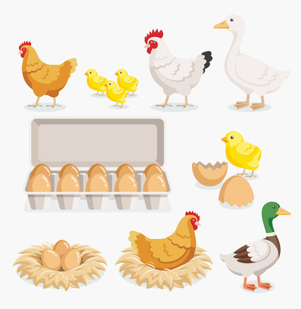 Chicken duck chick egg packaging and chicken eggs on the nests. Vector illustration flat design. Imagens - 67676751