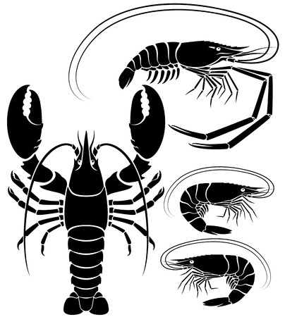 gamba: camarones de langosta y langostino. Ilustraciones vectoriales.